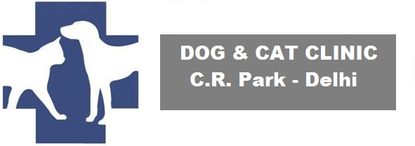 Dog and Cat Clinic