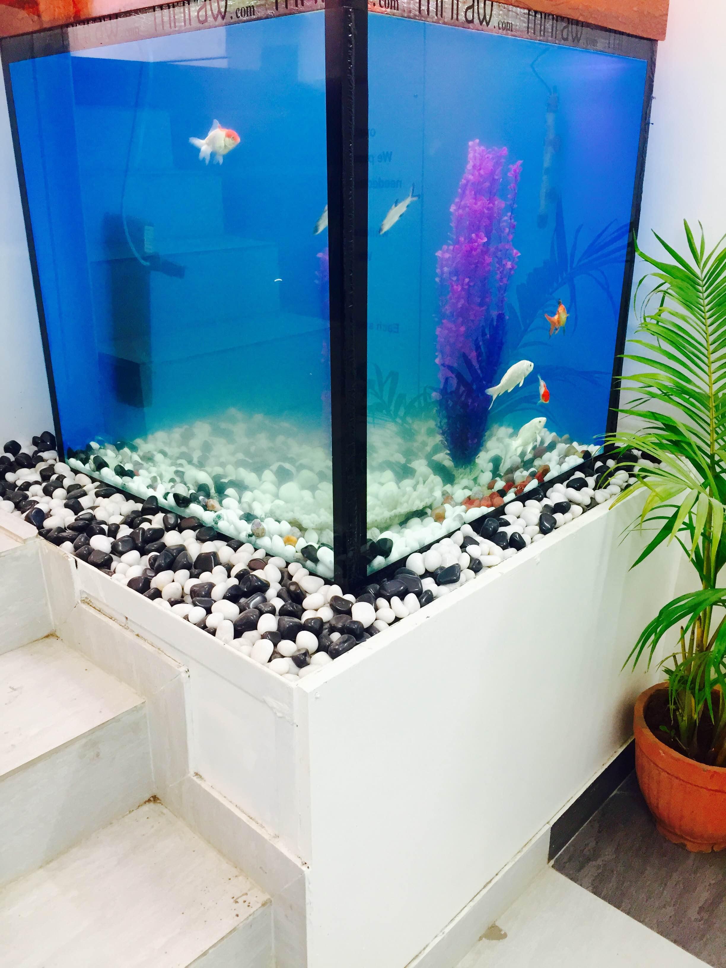 Fish aquarium in surat timings - Dental Surgeons In Pimple Saudagar Pune Instant Appointment Booking View Fees Feedbacks Practo