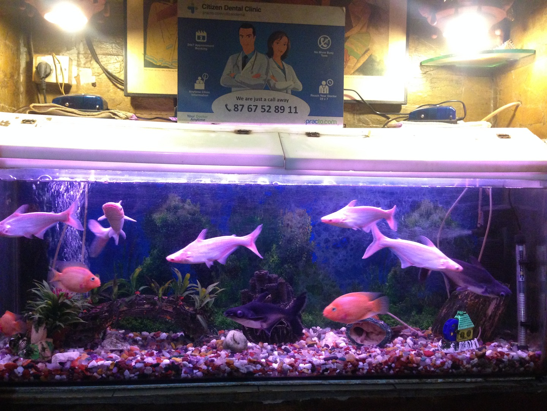 Fish aquarium in surat timings - Dentists In Vashi Navi Mumbai Instant Appointment Booking View Fees Feedbacks Practo