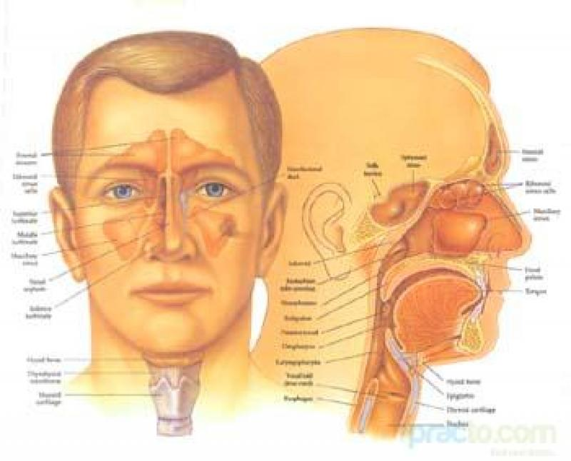 Dr s a usmani ent clinic practo ccuart Images