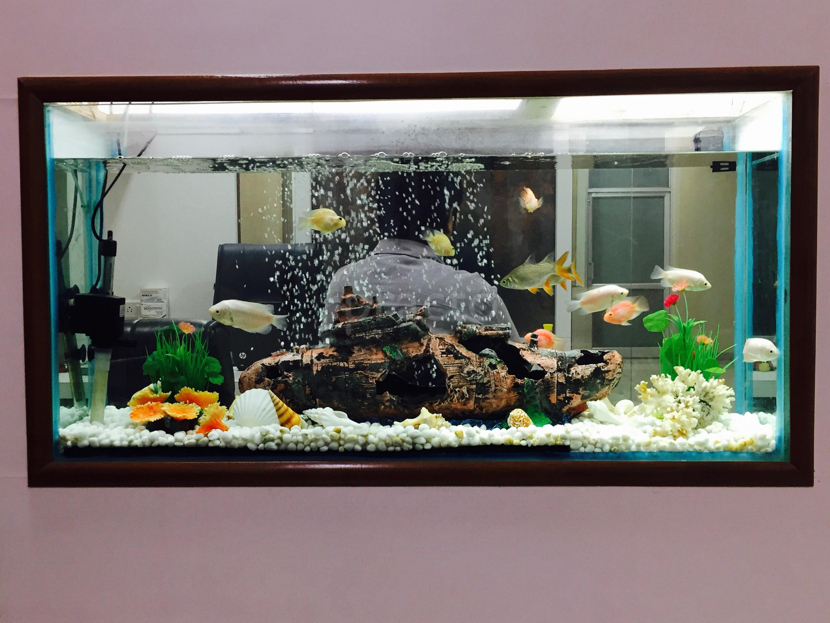 Fish aquarium in vadodara - Dr Manu Bansal Book Appointment Online View Fees Feedbacks Practo