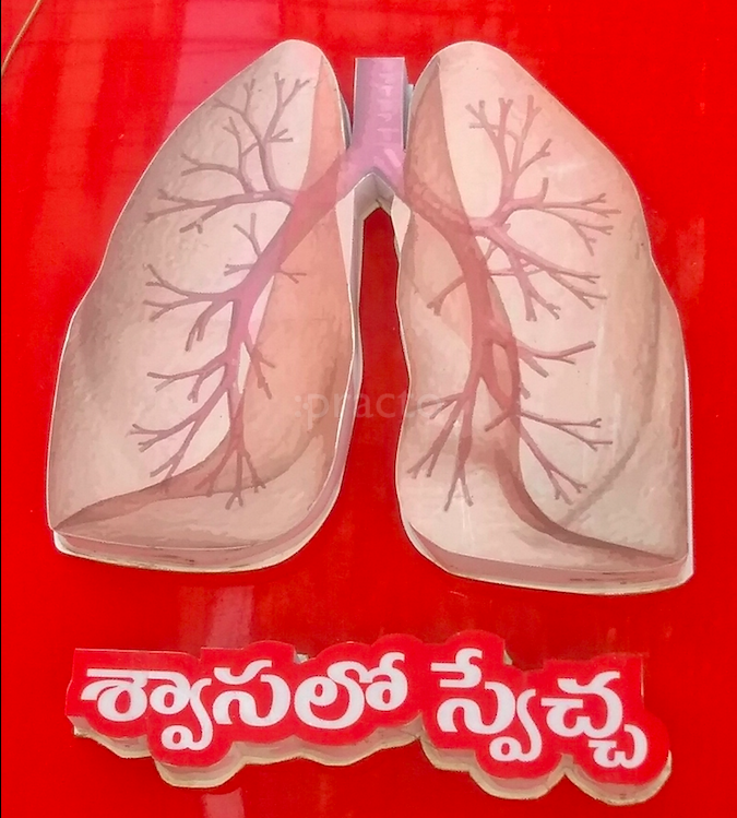K K Reddy Chest & Allergy Hospital