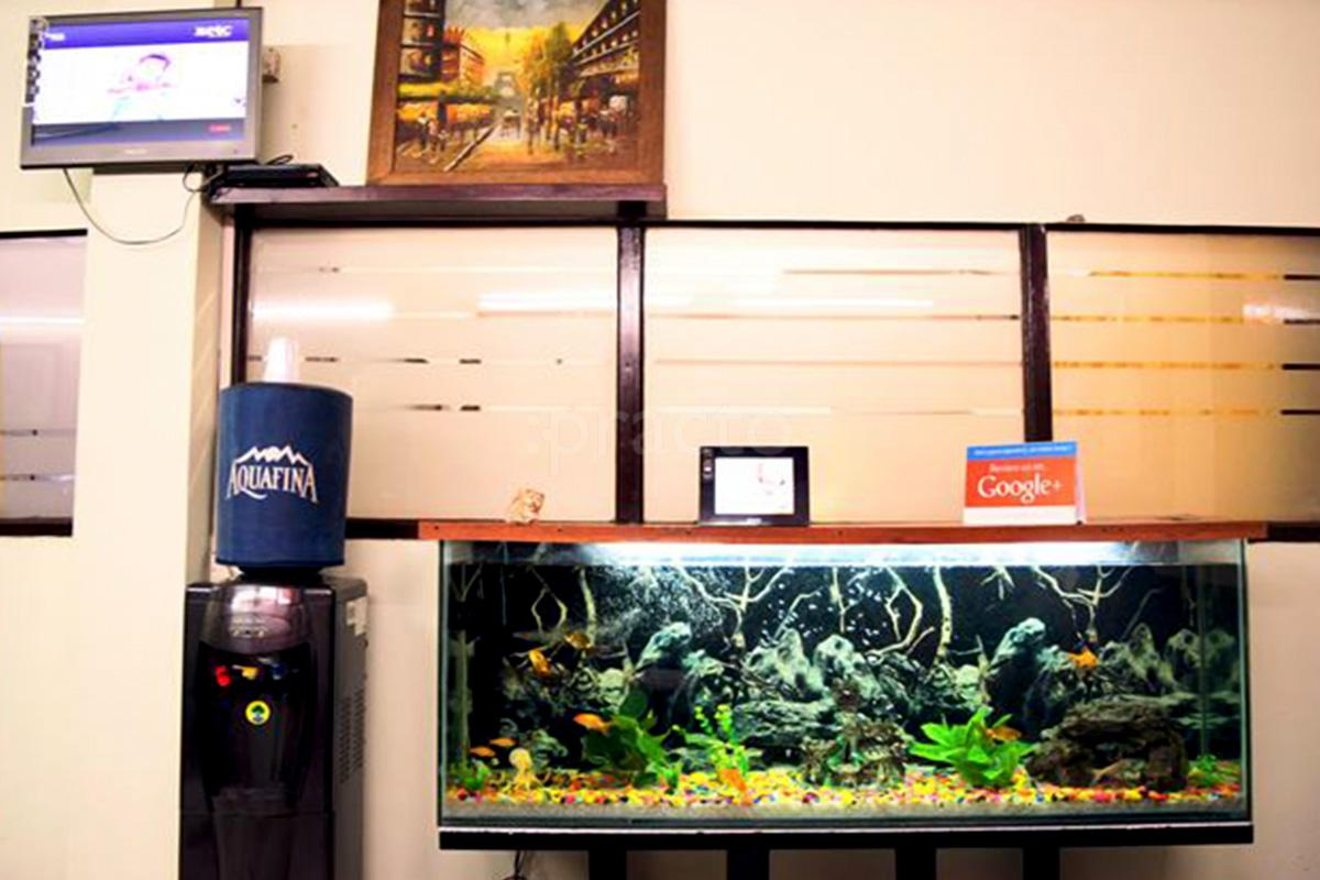 Fish Aquarium Rates In Delhi - Dentists in chittranjan park delhi instant appointment booking view fees feedbacks practo