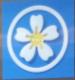 Gloden Blossom Dental Care