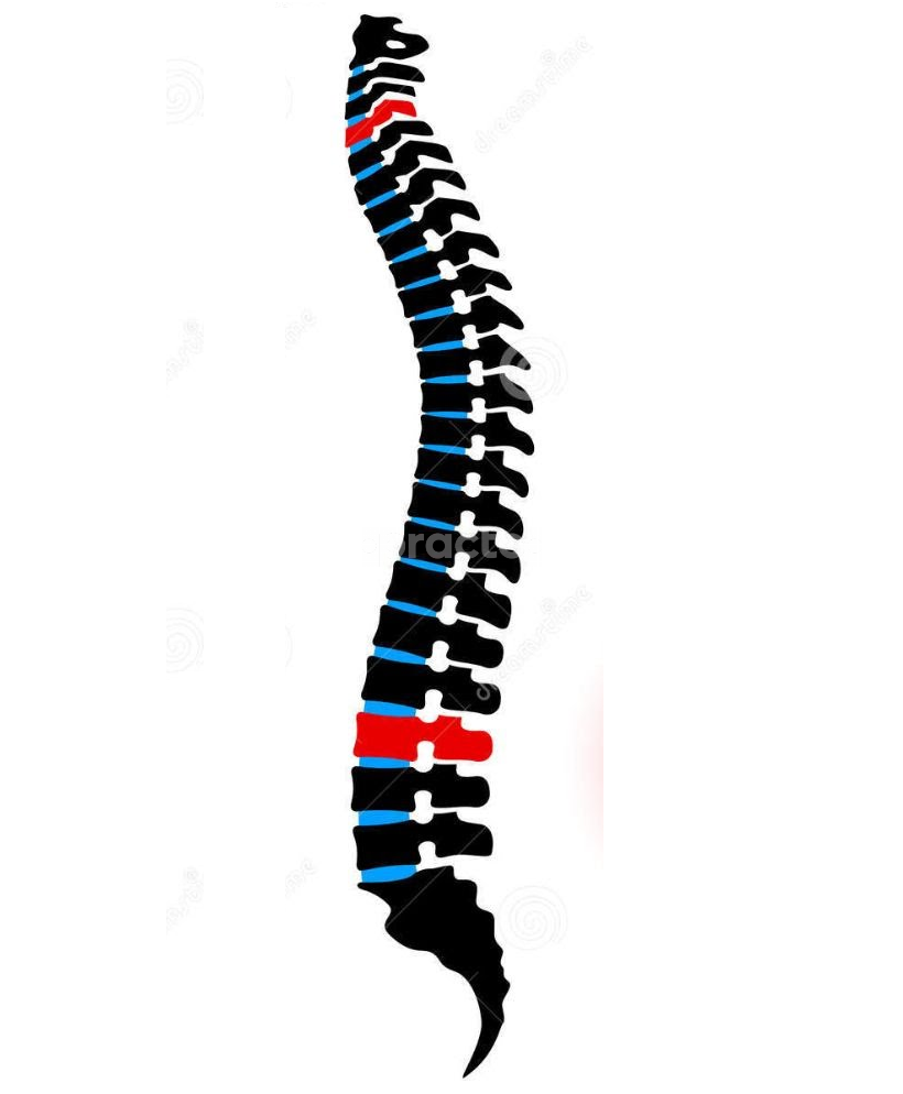 Spine & Scoliosis Clinic