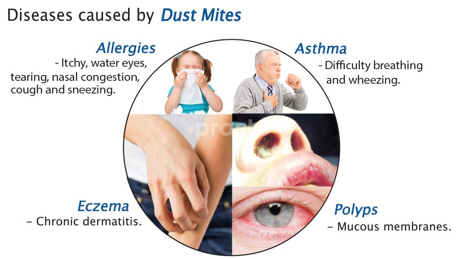 Dr.Zareen Mohamed's Allergy And Asthma Clinic
